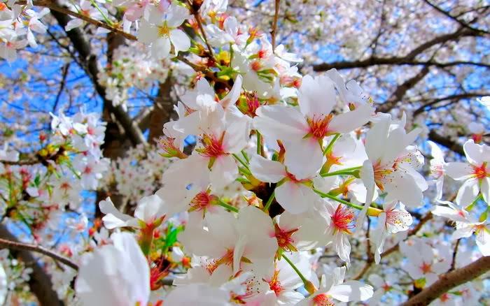 p1-spring-flower20