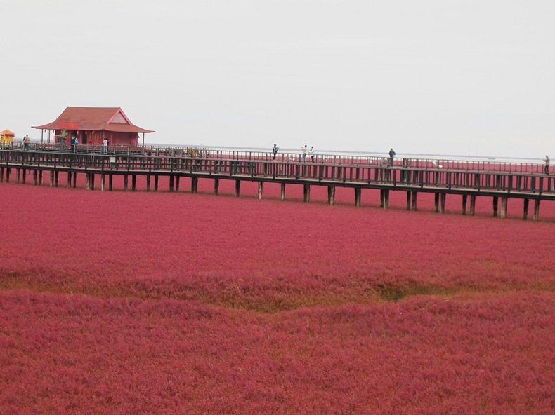 Biển Đỏ đẹp rực rỡ ở Trung Quốc