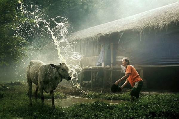 Vẻ đẹp thanh bình ở miền quê Indonesia