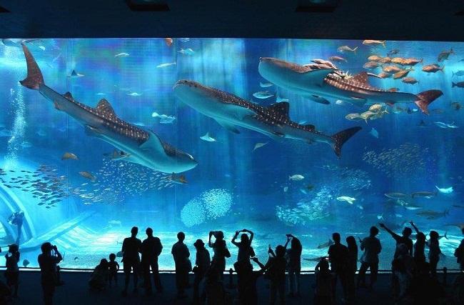 Tham quan thủy cung lớn nhất thế giới tại Singapore