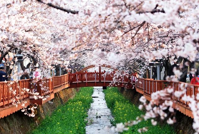 xuân Hàn Quốc