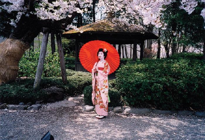 Geisha-Sakura