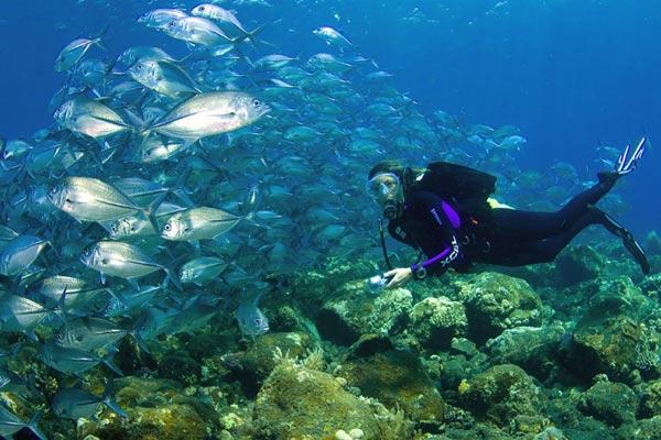 Lặn biển là một trong những môn thể thao được yêu thích ở đây