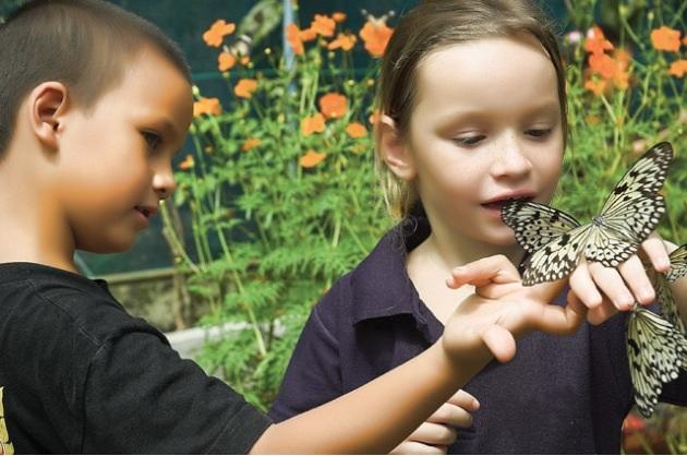 Phuket Butterfly3
