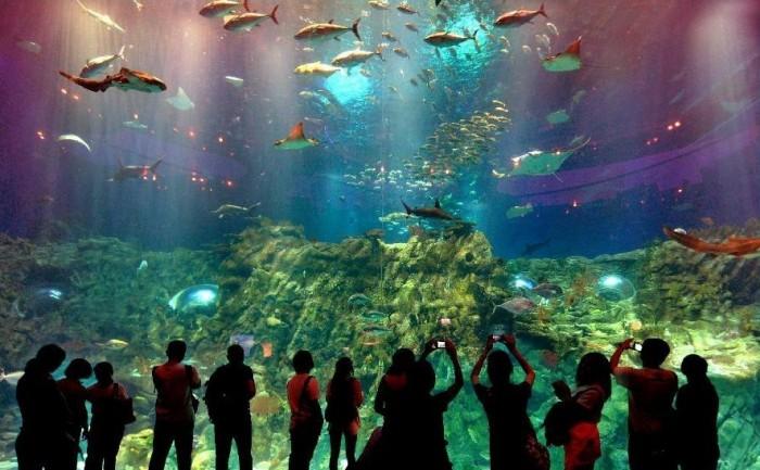 cv hải dương bể cá