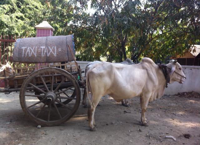 taxi bò