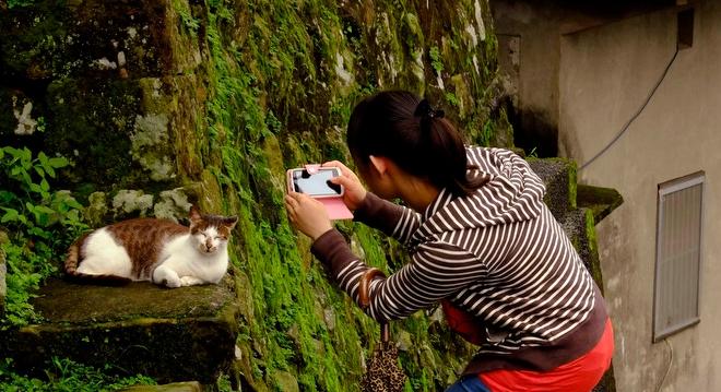 làng mèo Houtong Đài Loan 2