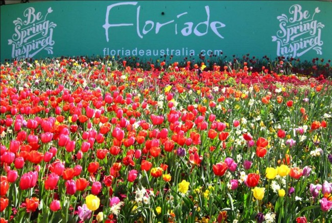 lễ hội Floriade