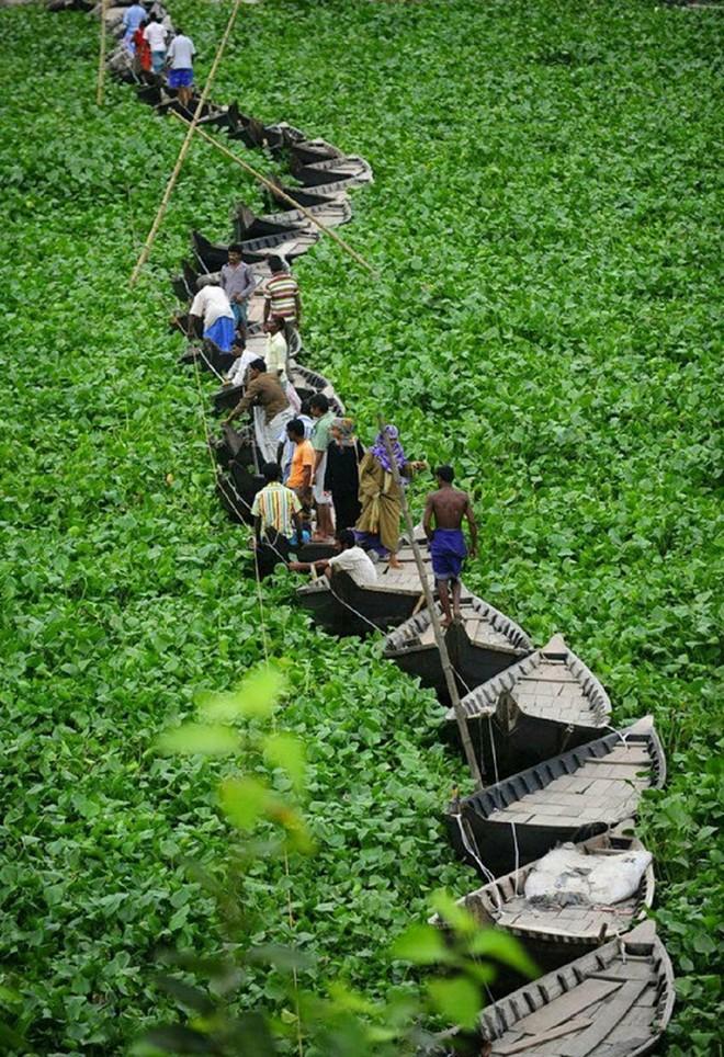 cầu thuyền nổi