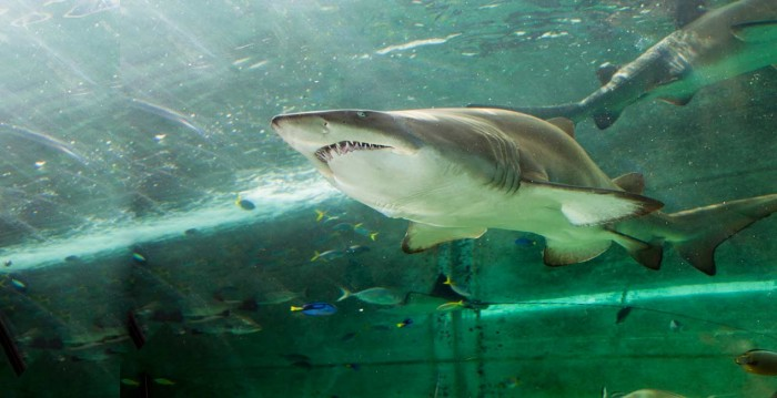 Sedney Aquarium