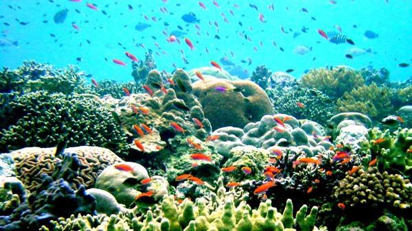 Rạn san hô Great Barrier,