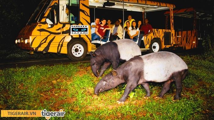 vuon thu dem Night Safari
