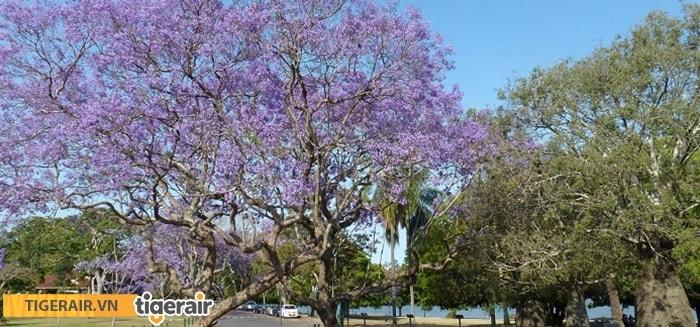 Ghé thăm vùng đất nữ hoàng Queensland