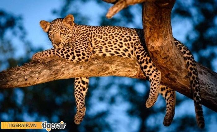 Vườn thú đêm Safari