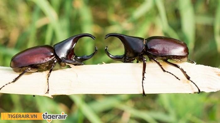 Có nhiều loại côn trùng khác nhau ở Singapore